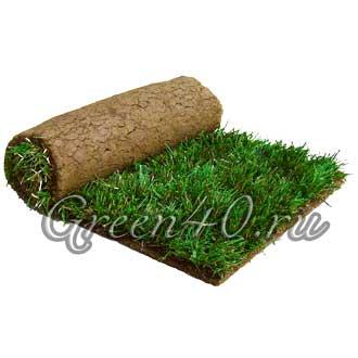 Рулонный газон в Липецке